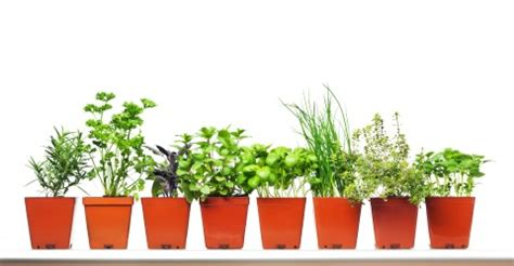 Flower Wholesale Business - Startup Biz Hub